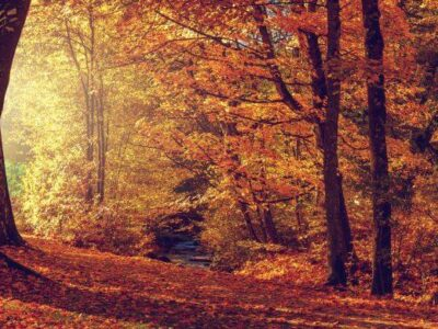 las-jesienia-terapie-lesne