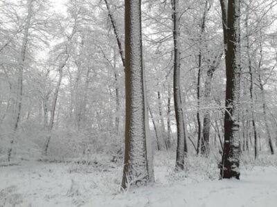 las-zima-kapiele-lesna