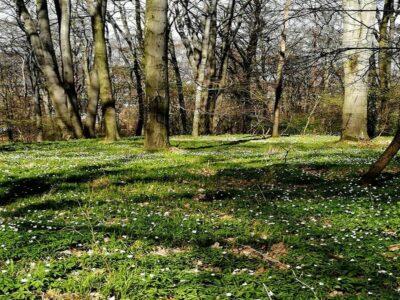 kapiele-lesne-wiosna
