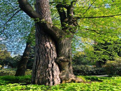 drzewa-obejmujace-sie-osrodek-terapii-lesnych