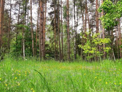 Zielona łąka z drzewami w tle